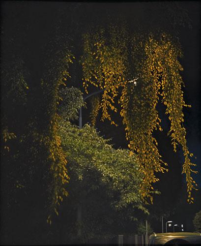 2010  Birke in Juvenellstraße134 x 110 cmÖl auf Holz